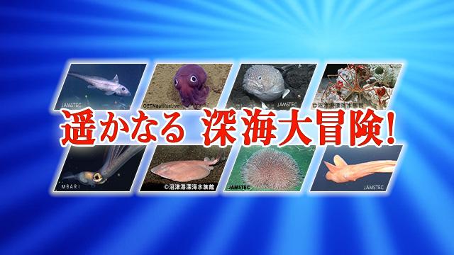 遥かなる深海大冒険6