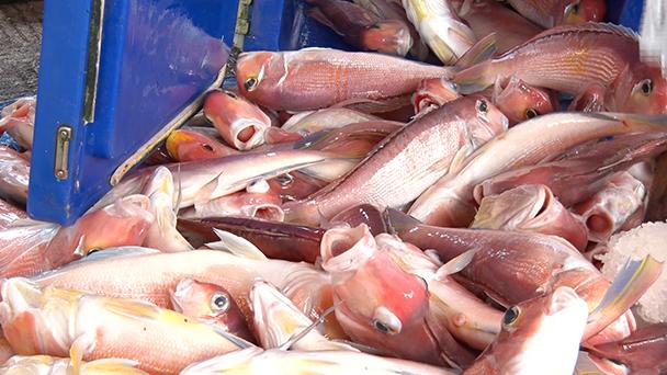 魚が食べたい!-地魚さがして3000港-
